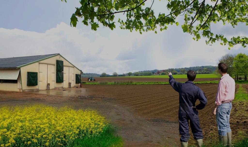 Matériel agricole éleveur poussin